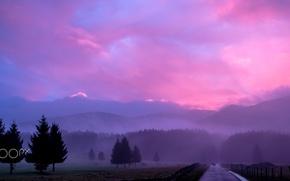 Wallpaper deer, fog, nature, haze, the evening, morning, animals