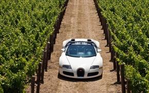Picture Sports CAR, PLANTASIA, WHITE, GRAPE
