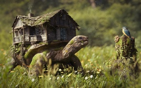 Picture forest, grass, flowers, house, bird, mushrooms, stump, turtle