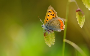 Wallpaper macro, butterfly, plant, wings, insect, speck