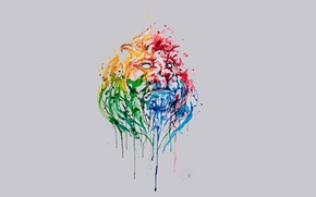 Picture rainbow, Lion, Marc Allante