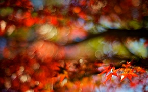 Picture autumn, macro, red, background, tree, widescreen, Wallpaper, blur, blur, leaf, wallpaper, leaf, widescreen, background, bokeh, …
