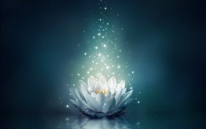 Picture flower, water, lights, Lotus, flower, water, sparkle, bloom, water lily