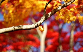 Wallpaper widescreen, leaves, leaves, blur, Wallpaper, leaf, leaves, tree, HD wallpapers, full screen, background, macro, branch, ...