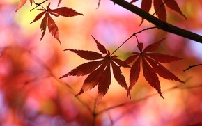 Picture leaves, macro, trees, red, background, tree, Wallpaper, blur, wallpaper, leaves, widescreen, leaves, background, leaves, tree, …
