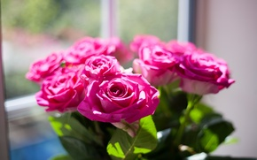 Picture pink, color, roses