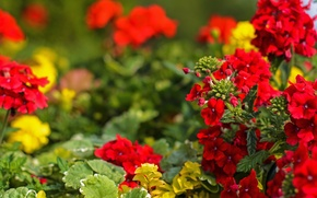 Picture Flowers, red, red, flowers, bokeh, bokeh