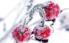 Wallpaper winter, snow, cherry