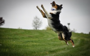 Picture background, jump, dog