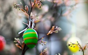 Picture NATURE, EGG, BRANCH, MACRO, EASTER, COLOR, GREEN