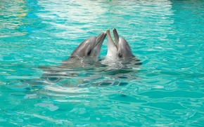 Picture Love, The game, Pair, Dolphins