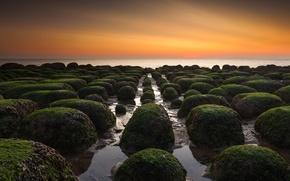 Picture sea, sunset, rocks, moss, horizon, orange sky