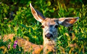 Picture greens, summer, grass, the sun, flowers, deer, bokeh