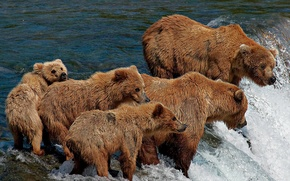 Picture BEARS, FOR, RIVER, FIVE, FISHING, FAMILY
