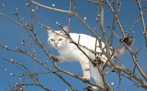 Picture tree, branches, spring, Kote