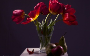 Picture flowers, red, tenderness, spring, Tulips