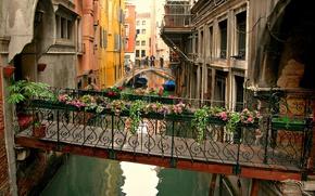 Picture flowers, Venice, channel, the transition, the bridge