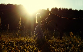 Picture field, summer, girl, the sun, horse