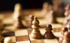 Picture macro, the game, chess, wooden, anticarsia