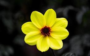 Picture flower, nature, background, petals