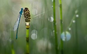 Picture drops, macro, background, plant, dragonfly, bokeh, Wallpaper from lolita777