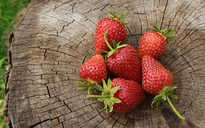 Picture summer, red, green, berries, tree, stump, strawberry, June