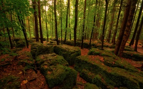 Wallpaper stones, forest, trees, autumn, moss, leaves