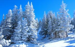 Picture winter, snow, trees, landscape
