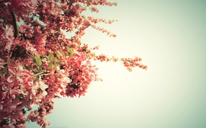 Wallpaper tree, springtime, color, spring