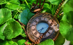 Picture leaves, time, Watch