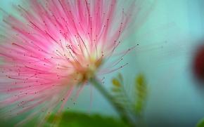 Picture flower, macro, background, blur, flower