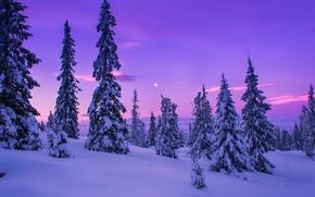 Picture winter, snow, trees, rasvet
