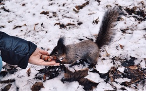 Picture winter, white, hands, protein, nuts, cold