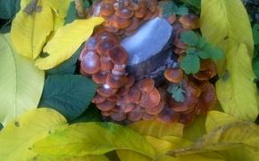 Picture autumn, leaves, mushrooms, October