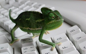 Wallpaper chameleon, keyboard