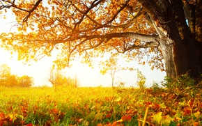 Picture autumn, grass, leaves, trees, Sunny forest