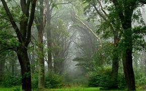 Wallpaper fog, summer, after the rain, forest
