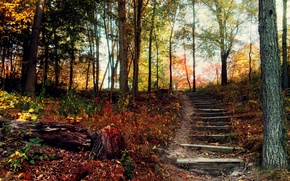 Picture autumn, forest, hill, ladder, steps