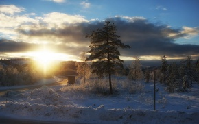 Picture winter, landscape, morning