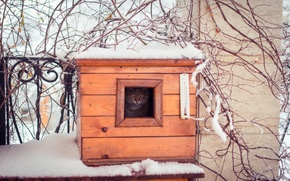 Picture winter, cat, cat, look, snow, branches, nature, fence