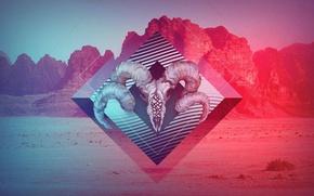 Wallpaper color, sake, mountains, skull, horns, pint, art