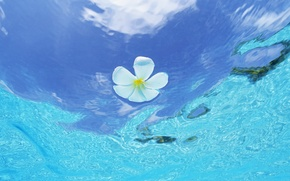 Picture wave, flower, drops, art, waves, flower, art, drops, plumeria, frangipani, plumeria, frangipani, water and sky, ...