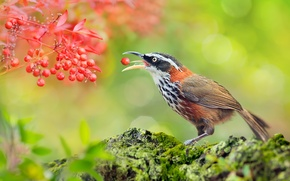 Picture leaves, berries, bird, stone, moss, bokeh