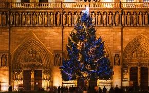 Picture France, Paris, tree, Christmas, Cathedral, Notre Dame de Paris
