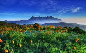 Picture the sky, mountains, tulips