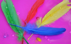 Picture macro, paint, feathers