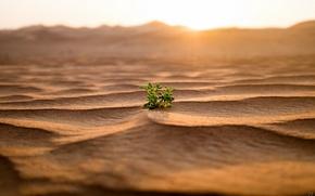 Picture sand, nature, rostenie