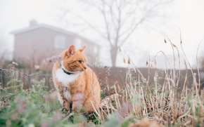Picture grass, cat, red