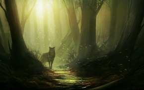 Picture forest, light, trees, Wolf, path, moths