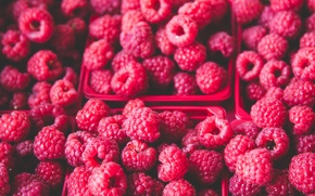 Picture berries, raspberry, a lot